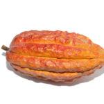 kakaove-boby