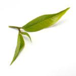 zeleny-caj